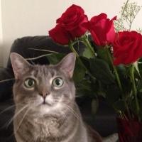 Photo of Red Rebel (@redrebel)